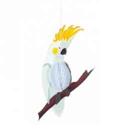 Perroquet blanc Alvéolè